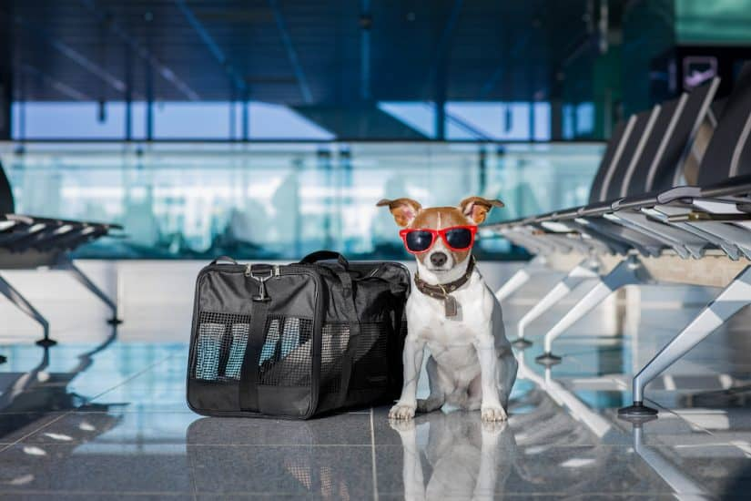 Airline approved dog:pet carriers (in cabin)
