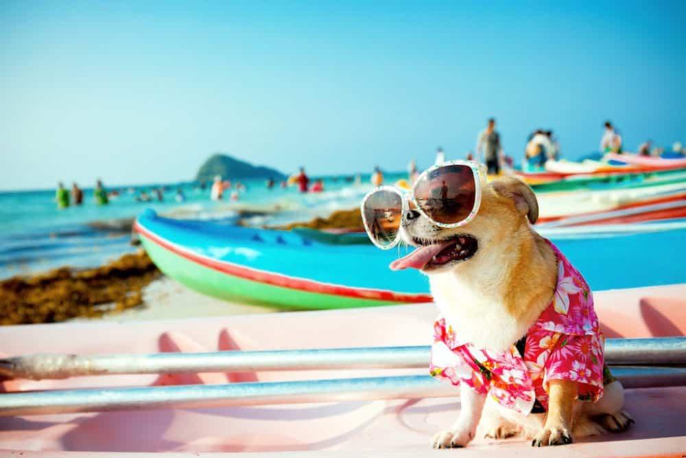 Dog travel kit