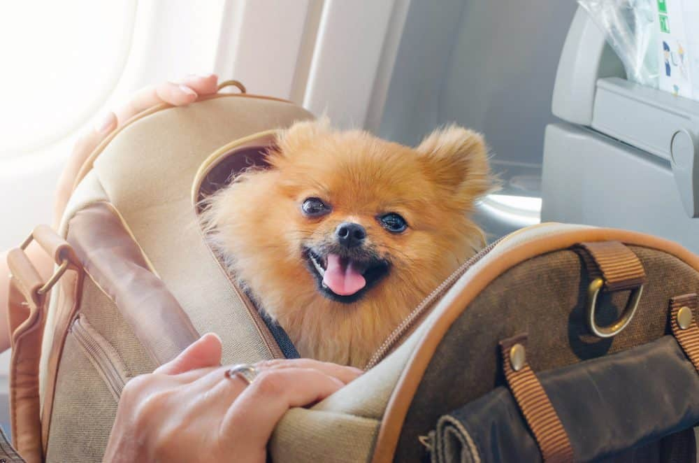 Top 15 Airline approved dog/pet carriers (in cabin) Global Grasshopper