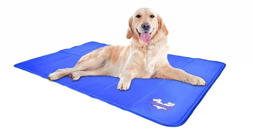 Travel accessories for a dog - a cooling mat