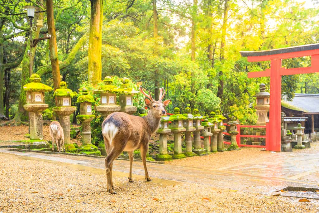 Nara - most beautiful places to visit in Japan