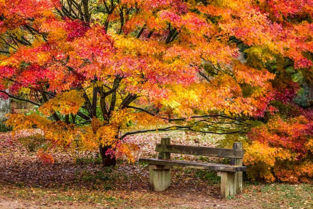 Bodenham Arboretum Autumn