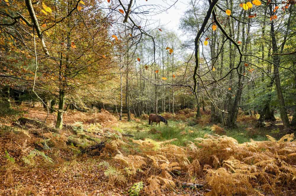 New Forest - beautiful places to visit in Hampshire