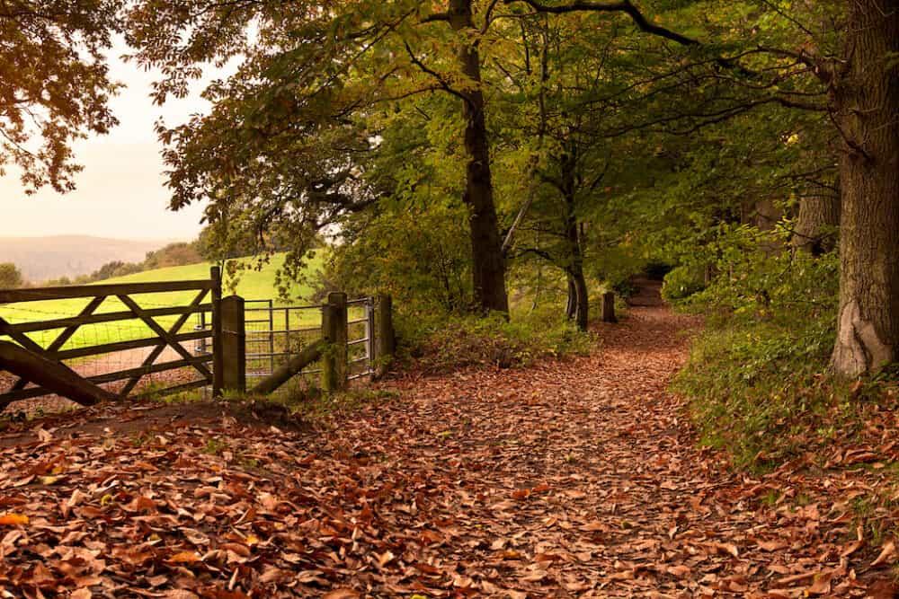 North Downs Surrey