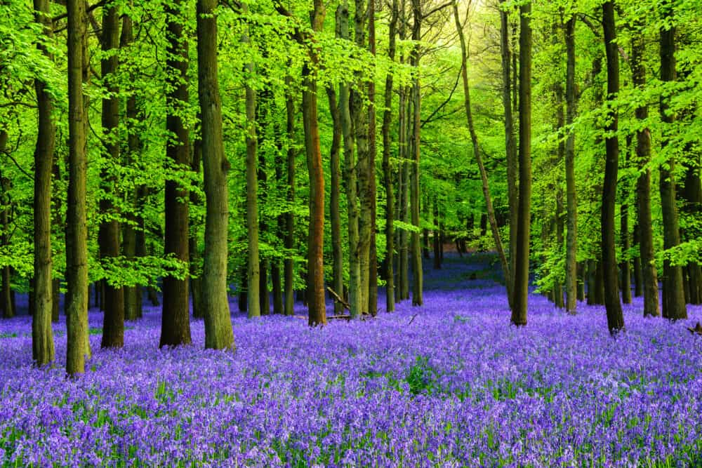 Ashridge Estate - best places to visit in Hertfordshire