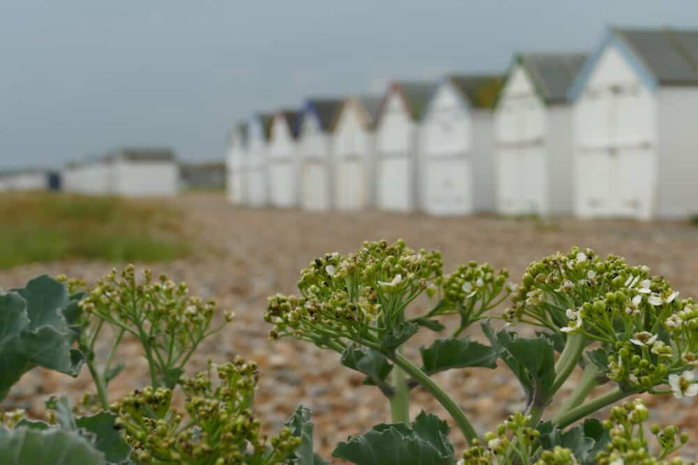 Goring-by-Sea - West Sussex
