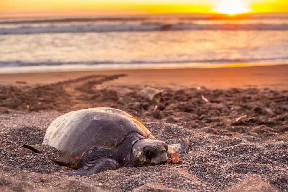 Playa Ostional Costa Rica