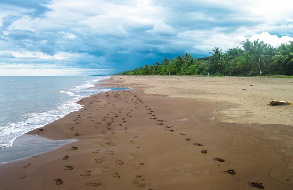 Tortuguero National Park Beach