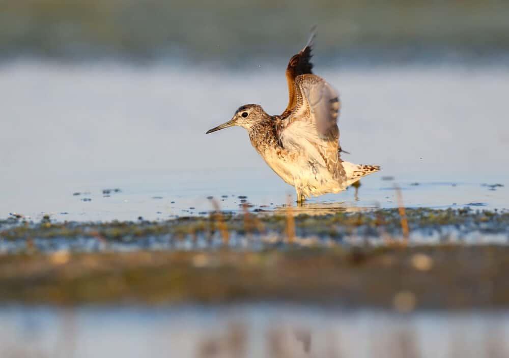 Bombay Hook Wildlife Preserve