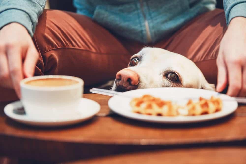Dog friendly cafe Seattle