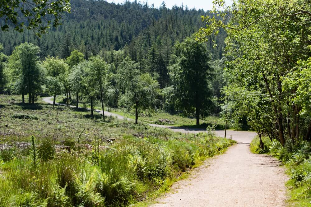 Haldon Forest Park Devon