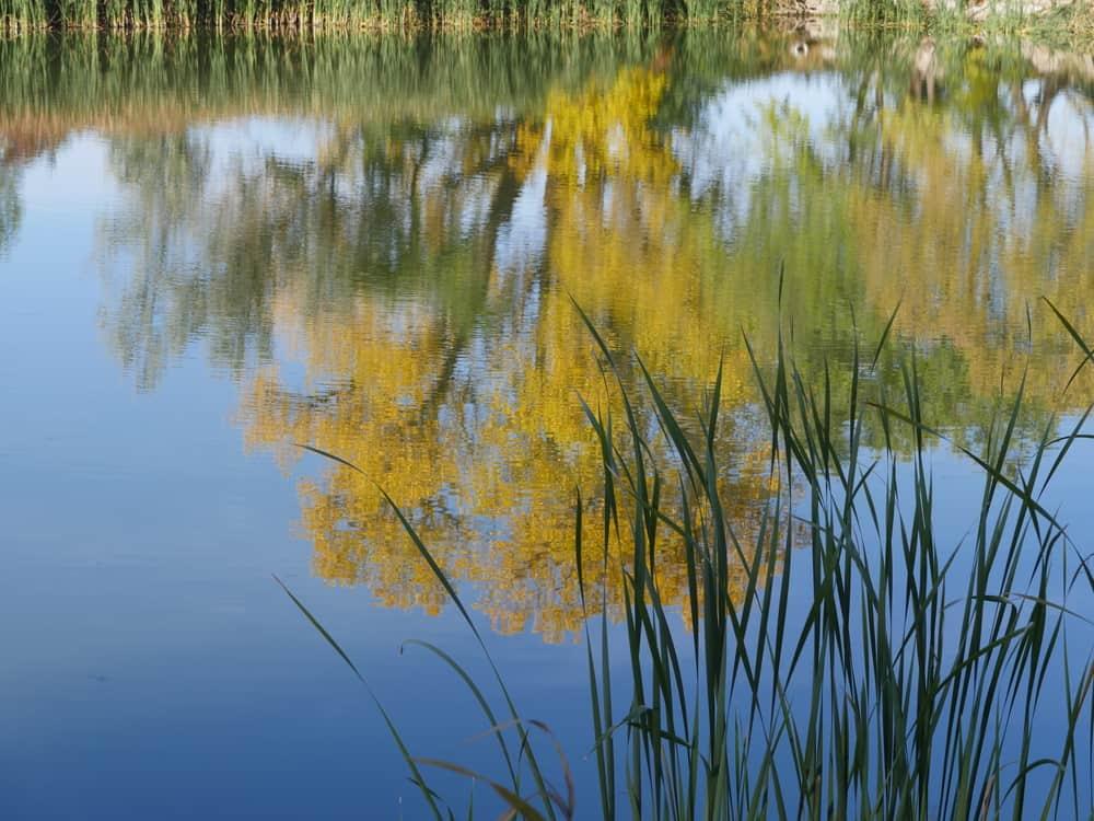 Hoopes Reservoir Delaware