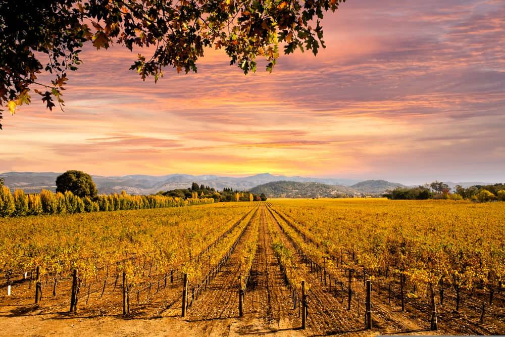 Beautiful Napa Valley California