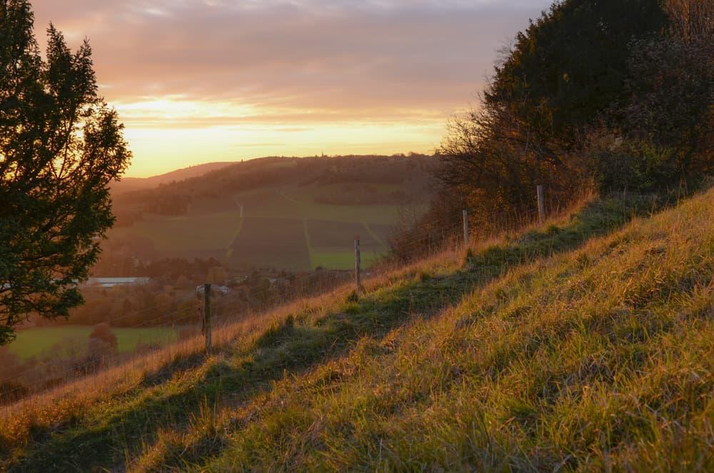 Box Hill - beauty spots in Surrey