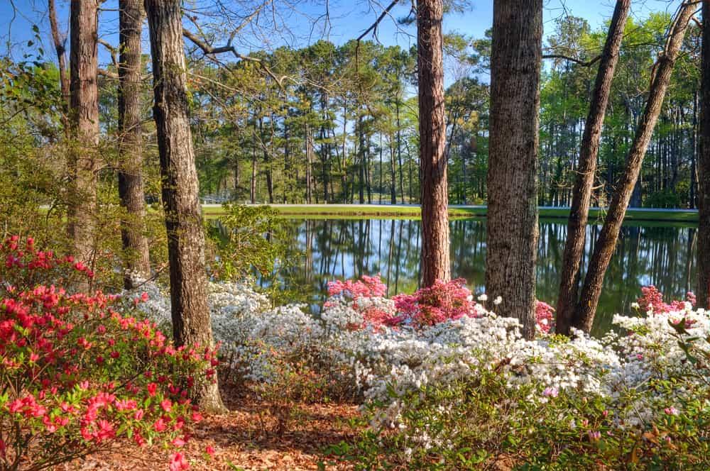 Callaway Gardens Georgia