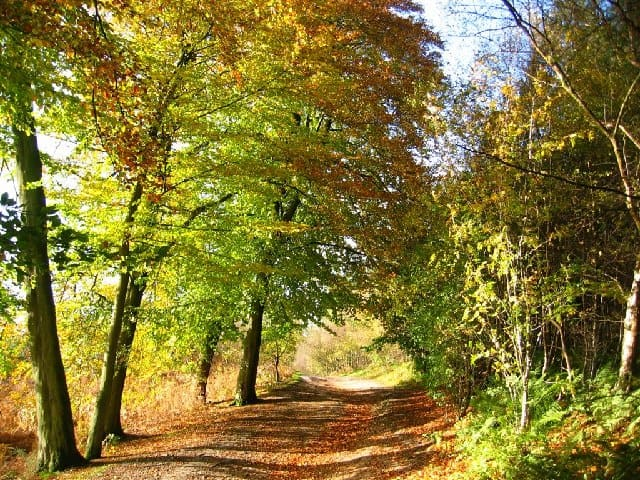 Delamere Forest chester