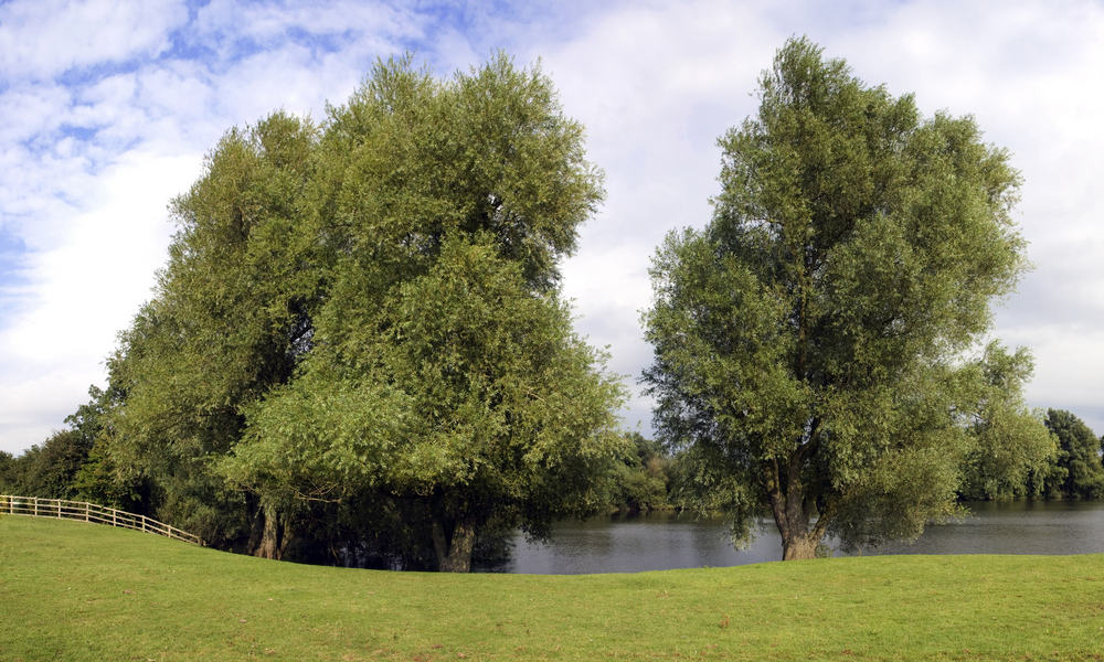 Harrold-Odell Country Park