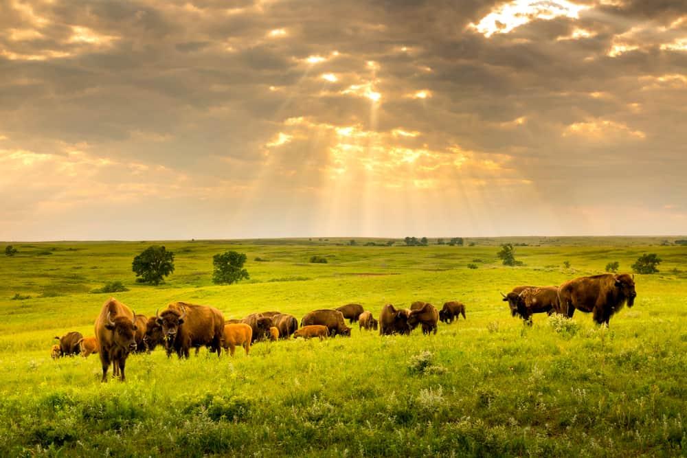Kansas Maxwell Prairie Preserve