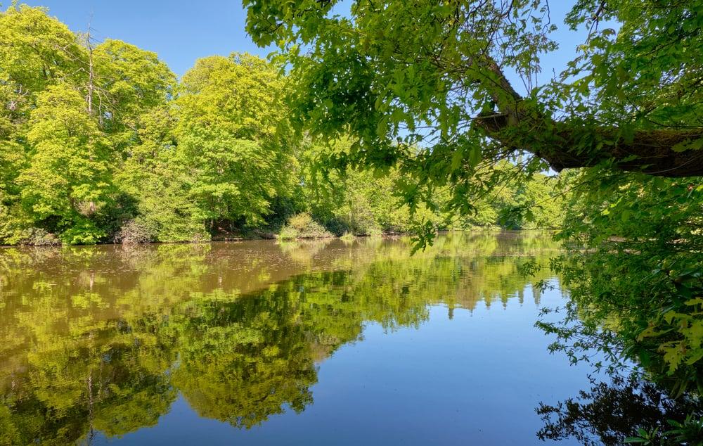 Lymm Damm Lake Park