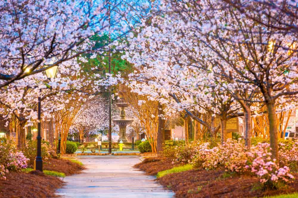Macon - beauty spots in Georgia