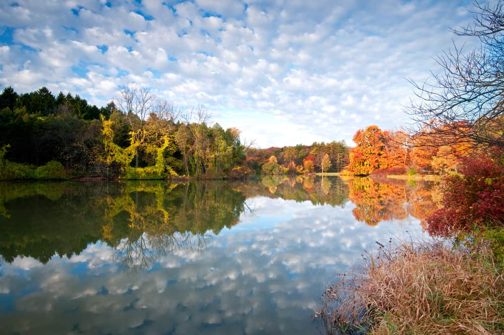 Morton Arboretum. - most beautiful places to visit in illinois