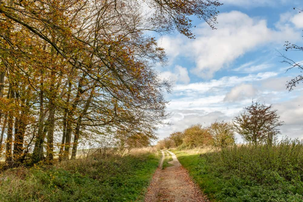 Ridgeway Trail Oxfordshire
