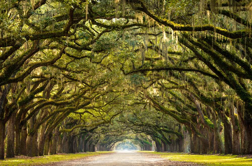 Savannah - best places to visit in the USA in spring