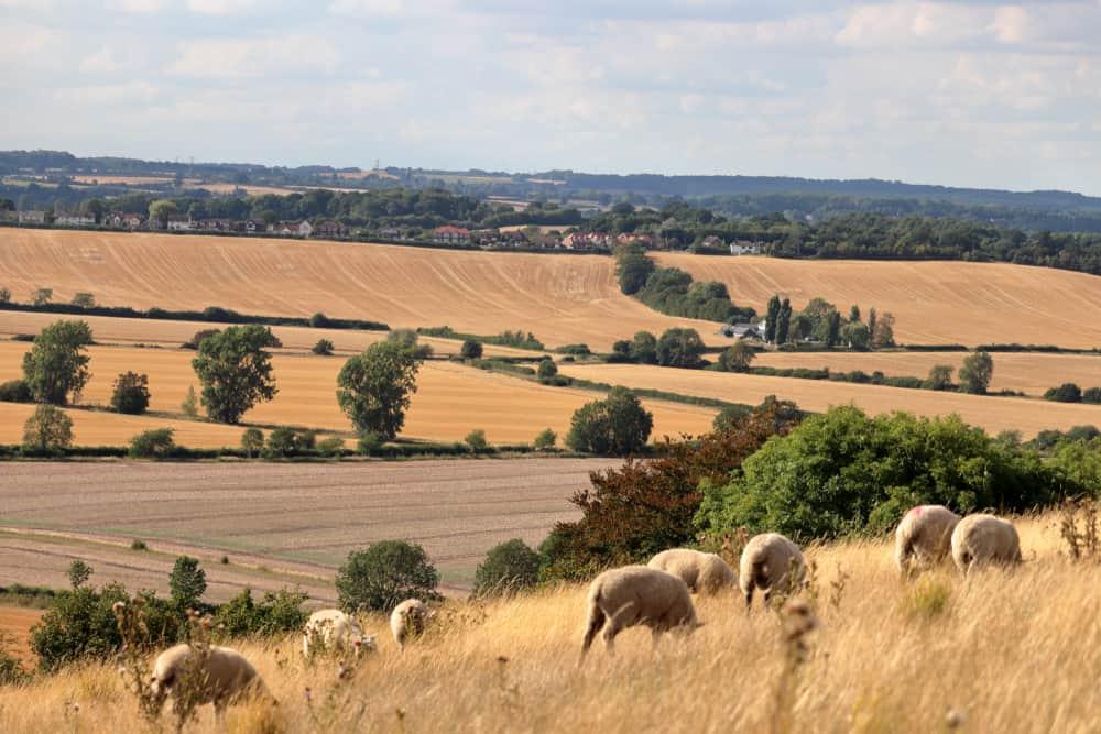 Sundon Hills Befordshire