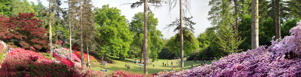 Virginia Water - best places to visit in Surrey