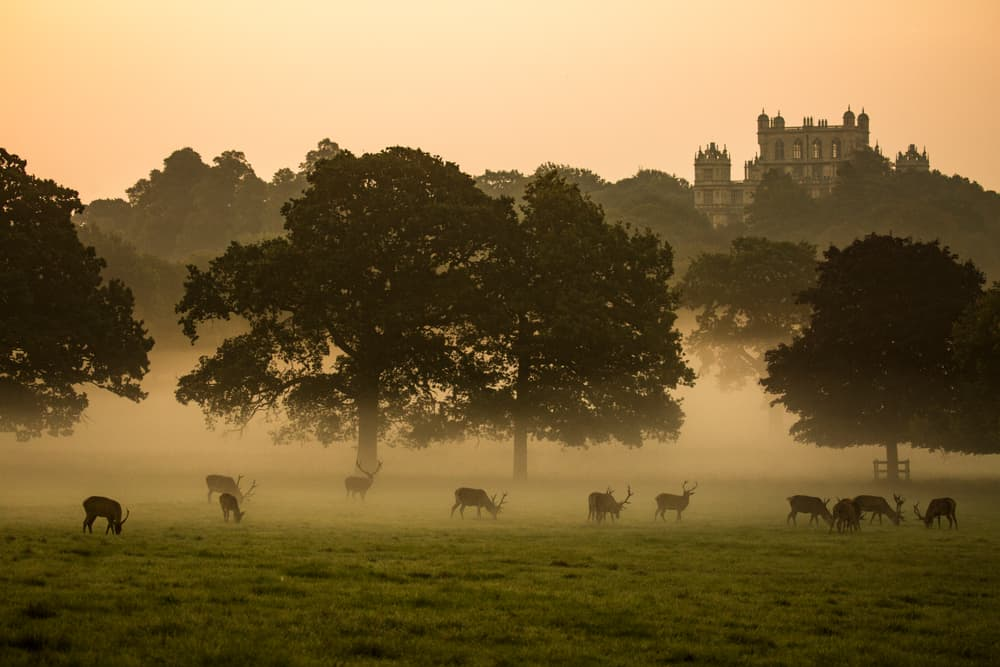 Wollaton Hall & Park