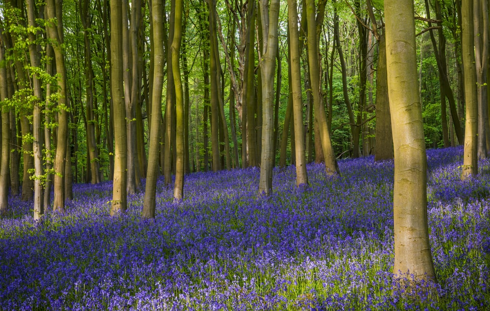 Wytham Woods Oxfordshire