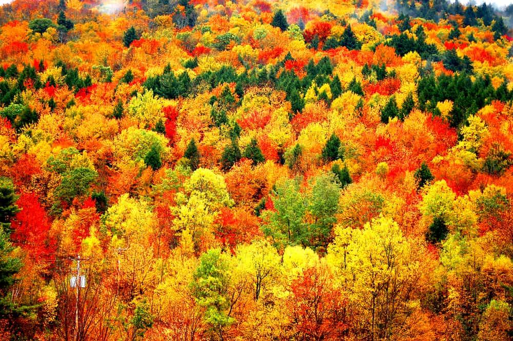Catskills in the Fall NY