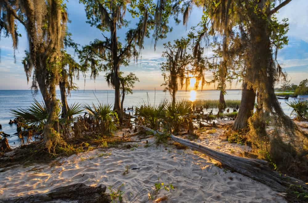Fontainebleau State Park