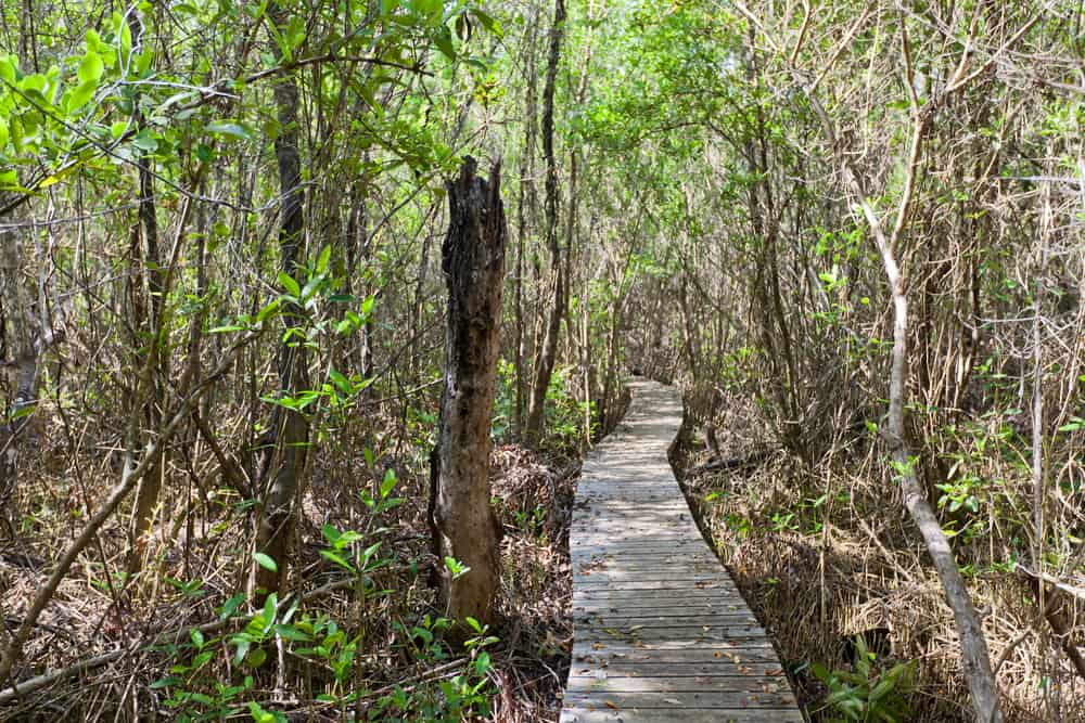 Mastic Trail Cayman Islands
