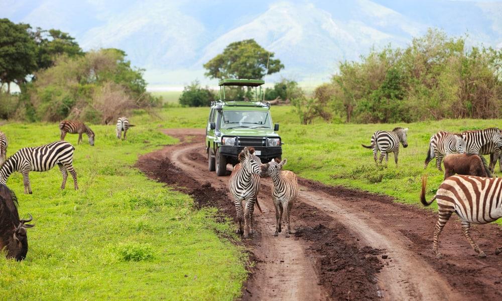 Game drive Tanzania