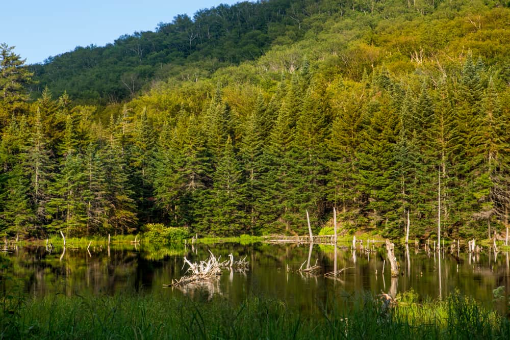 Camels Hump State Park