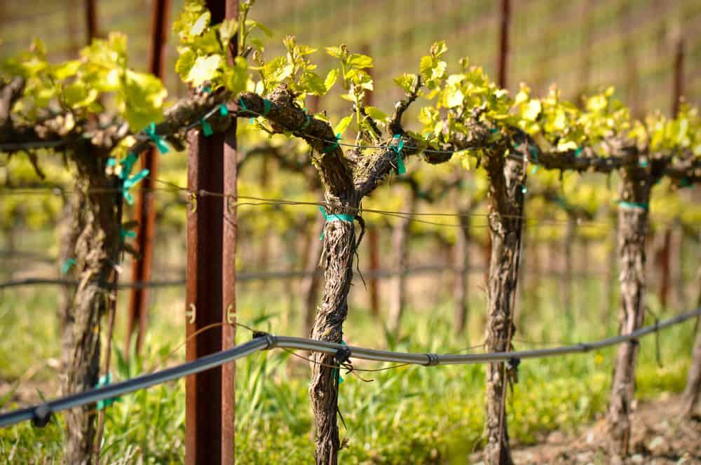 Glacial Till Vineyard and Winery