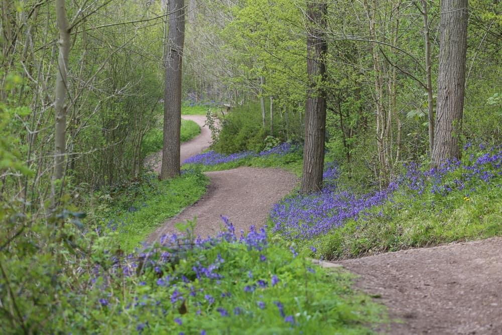 Nene Park Cambridgshire