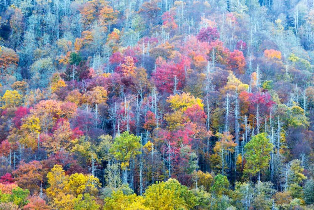 Smokey Mountains National Park
