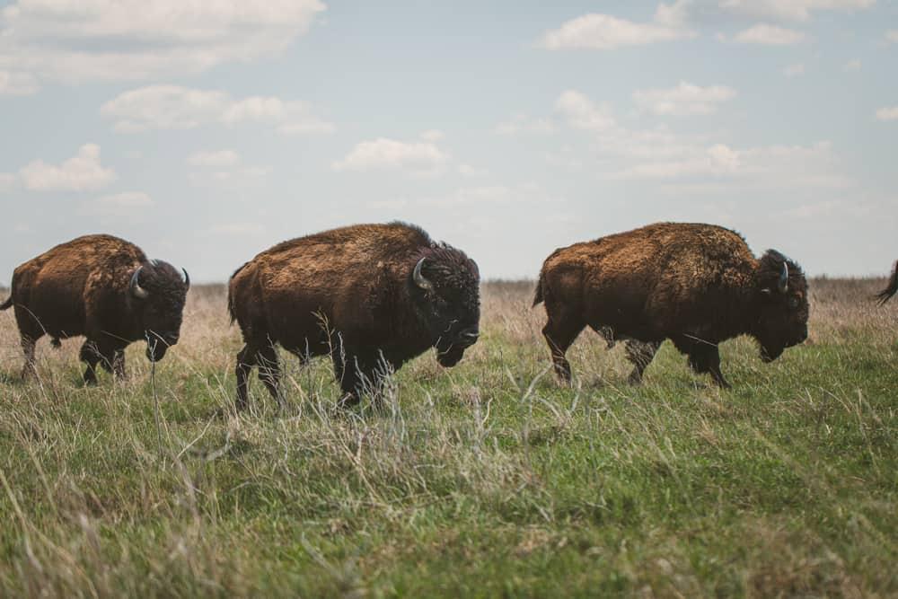 Tallgrass Prairie Oklahoma