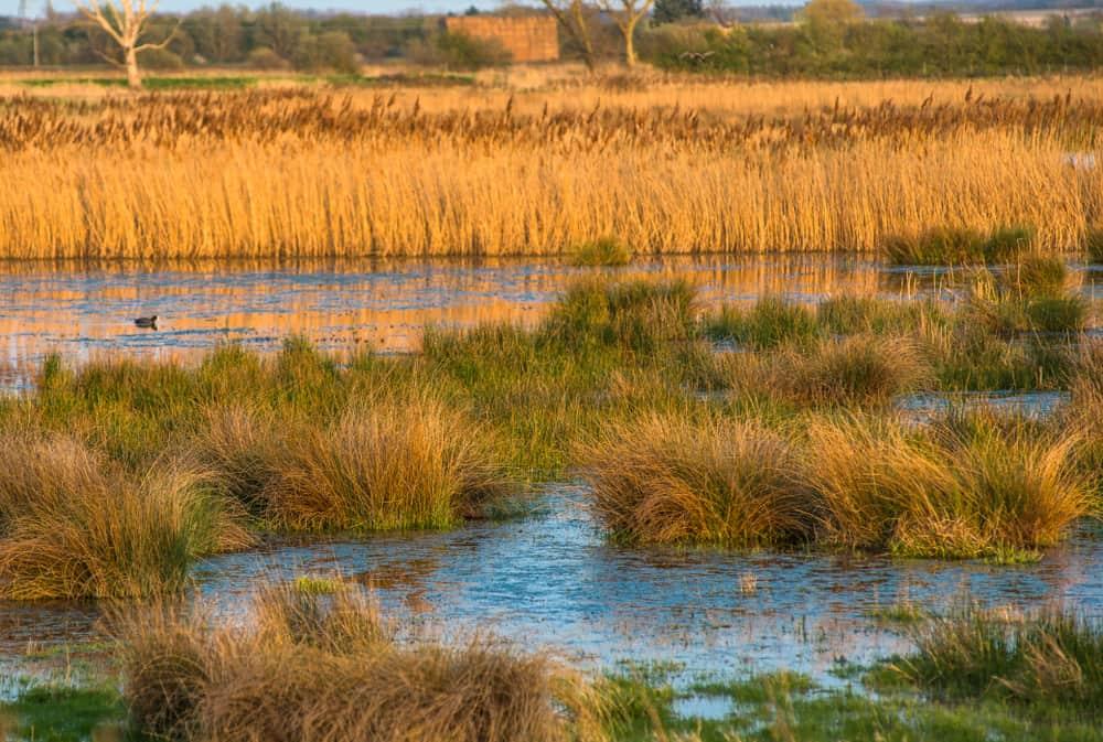 Wicken Fen Reserve Cambridgeshire
