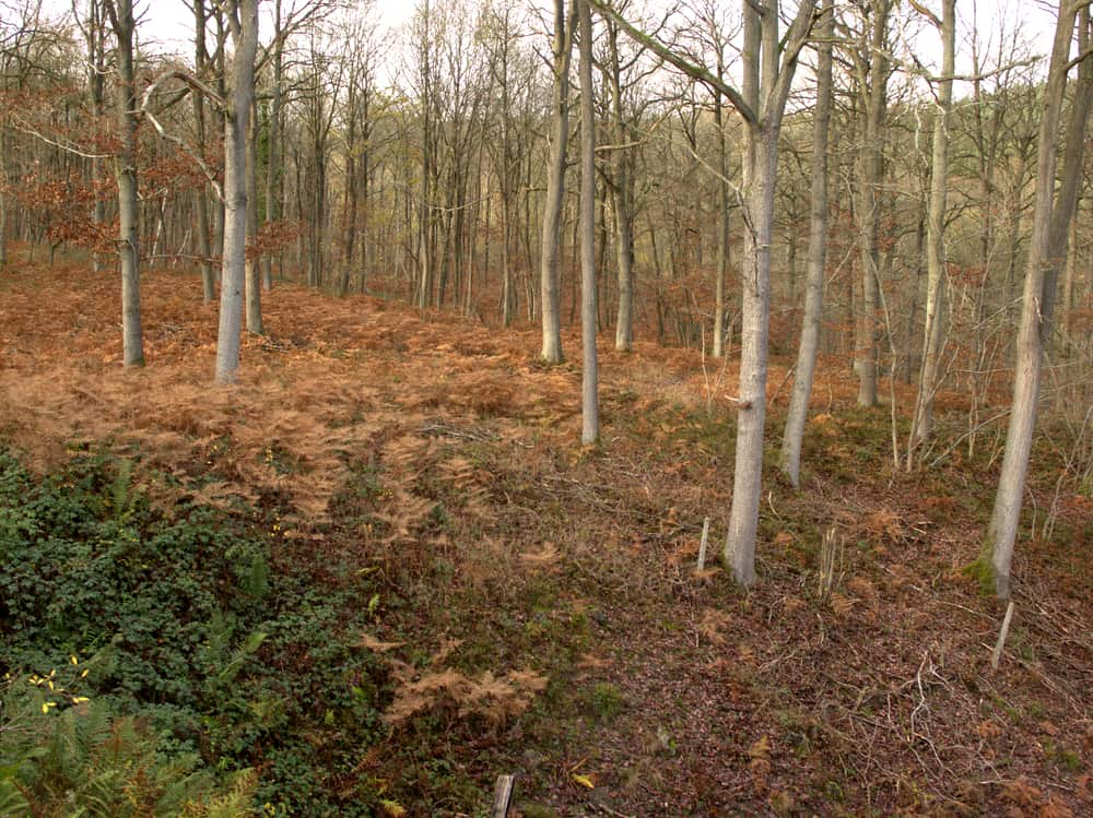 Wyre Forest Worcestershire