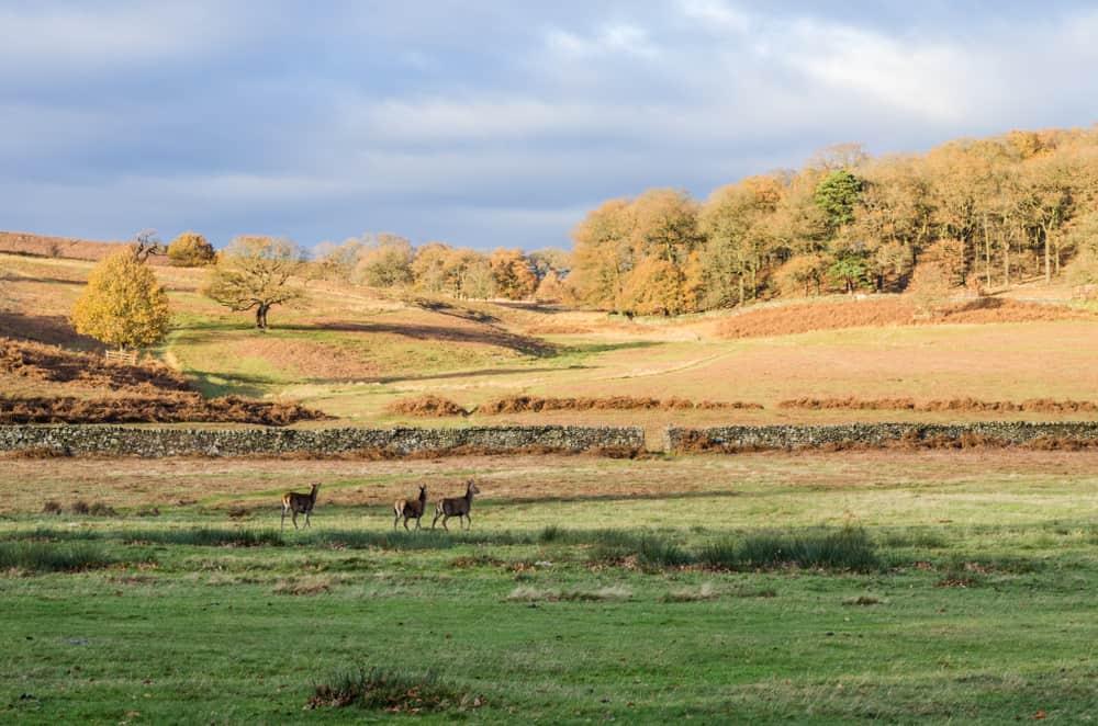Bradgate Park Leicestershire