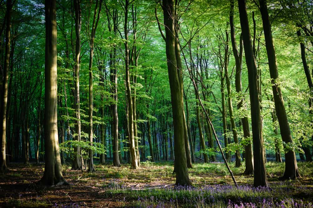 Beautiful woods Leicestershire