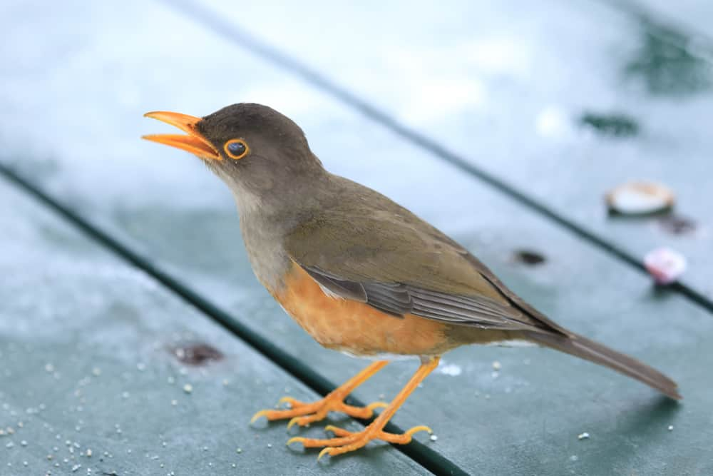 Bird Watching Christmas Island