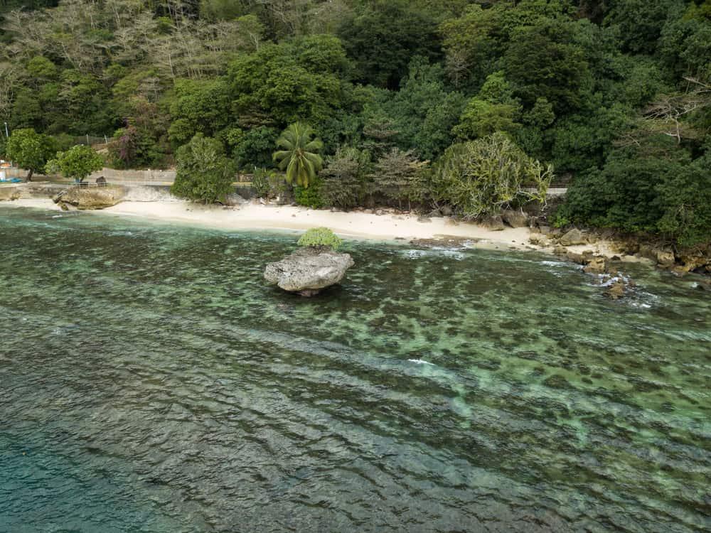 Christmas Island Jungle