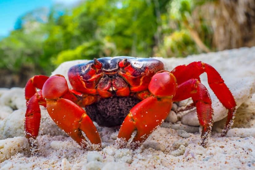 Reasons to visit Christmas Island