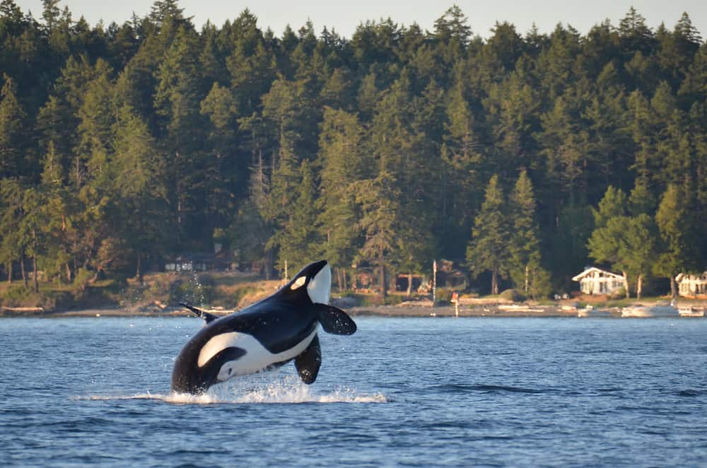 San Juan Islands - places to visit in August