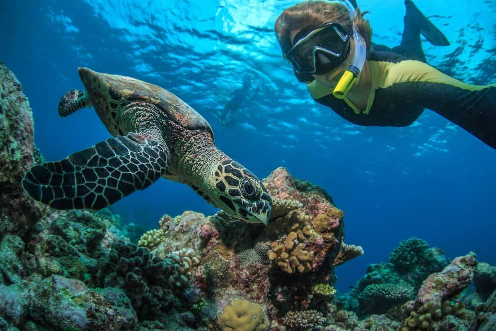 Sea Turtle Christmas Island