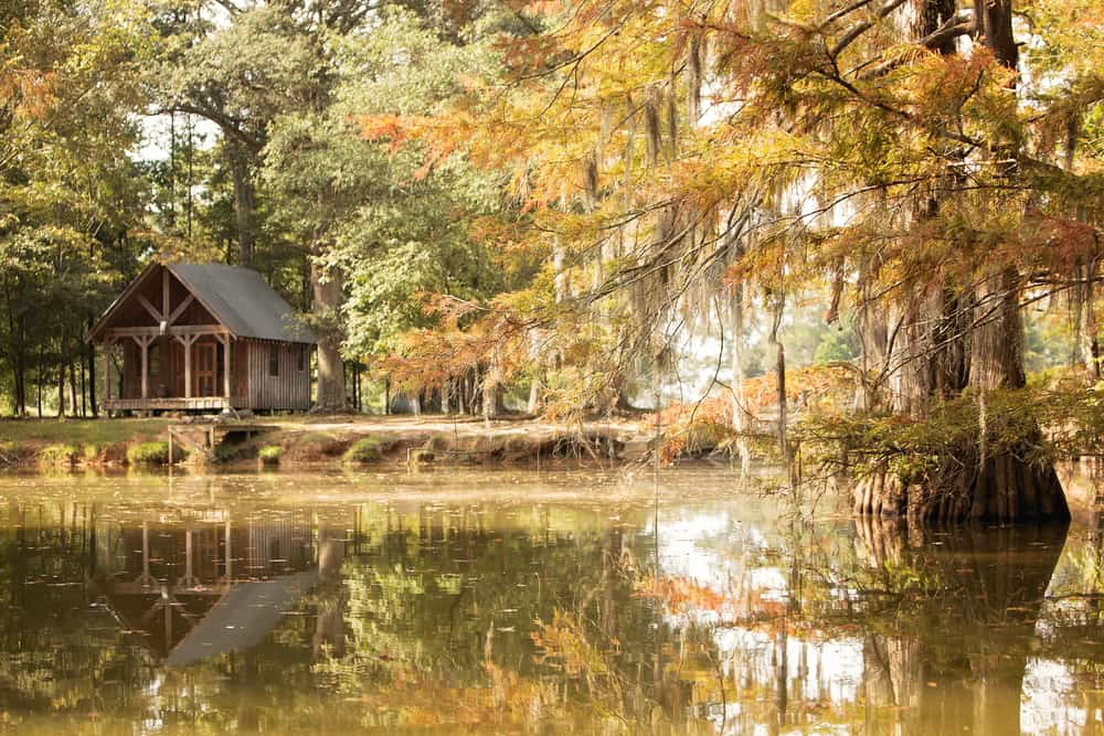 Bayou Country USA
